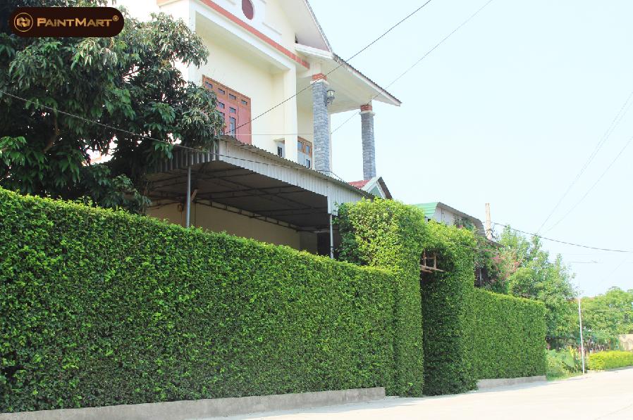 Một chiếc cổng bằng cây xanh
